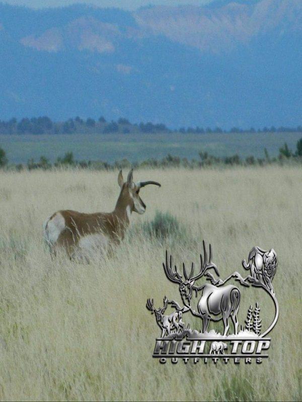 antelope-010